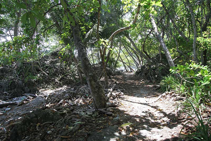 Jungle Trail To The Beach