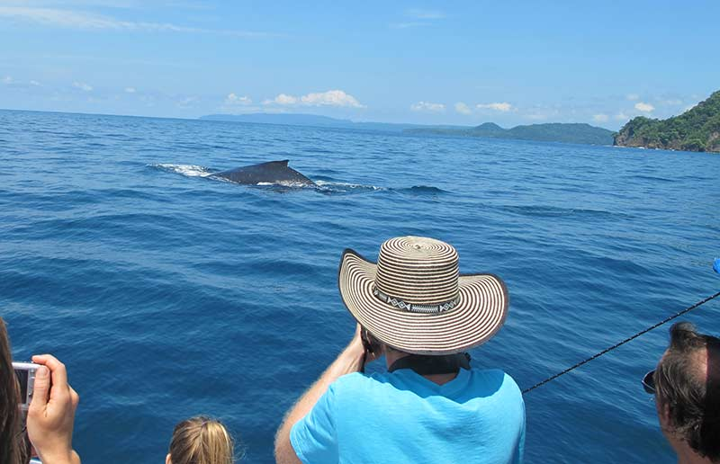 Whale watching from the scuba boat